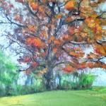 Large Oak - fall