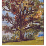 Large Oak - late summer